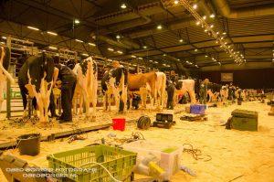 De Holland Holstein sHow blijft groeien!