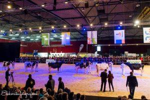 Videokeuring van bedrijfscollecties als alternatief voor de Holland Holstein sHow 2020