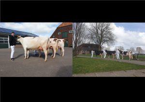 Steegink en Van der Kolk kampioenen bedrijfscollecties Holland Herd cHampionship